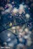 IMG_2206 (taka_Q) Tags: 春 野生生物 花・草木