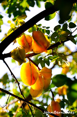 carambola (John Bernardes Justiniano) Tags: frutas carambola tropicais