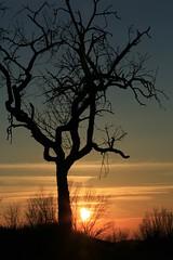 tramonto ( in EXPLORE ) (Betti52) Tags: tramonto