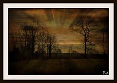 Glowing (patrick.verstappen) Tags: winter sun texture nature landscape photo yahoo google flickr belgium image pat sigma excercise textured limburg februar facebook picassa twitter gingelom ipernity d5100 pinterest ipiccy
