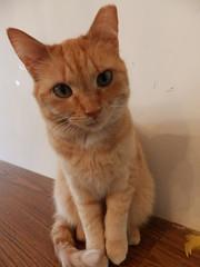 cats cat virginia feline animalrescue felines animalsanctuary animalrefuge rapidan rikkisrefuge
