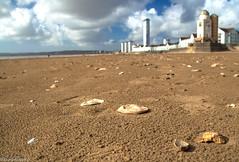On the beach [Explored] (Eiona R.) Tags: wfc swanseabay smq