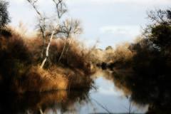 El ro Tajo en Aranjuez (Manuel Gayoso) Tags: espaa rio agua tajo reflejos aranjuez pajonales efectoorton
