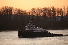 NOKEA (Chuck Stephens) Tags: columbiariver tugboat tug tugs tugboats vancouverwashington frenchmansbar workboats nokea canon6d sigma120400 pacificnorthwesttugs theothervancouver columbiarivertugs 7826908 367309280 wdd9274