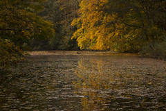 Autumn in the Netherlands (jeannetbijlsma) Tags: autumn trees plants lake tree fall yellow outside woods herfst geel beautyfull silince