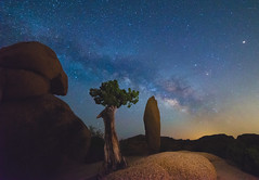 Milky Way Over Monolith & Leaning Juniper (pixelmama) Tags: california nationalpark desert joshuatree explore astrophotography milkyway pixelmama joshuatreenationalparkmilkyway monolithandleaningjuniper