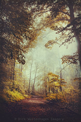 silent forest (Dyrk.Wyst) Tags: morning trees light summer mist nature leaves fog forest sunrise germany landscape deutschland licht buchenwald haze mood nebel sommer laub natur atmosphere mystical wuppertal landschaft wald bume sonnenaufgang stimmung morgens beechtrees outdooor
