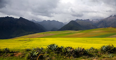 Flowery Sunlit Landscape Moray Maras (Rob Whittaker Photography) Tags: travel flowers storm peru southamerica nature yellow inca canon landscape pano cusco canoneos moray maras canoneos5d canonphotography canoneos5dmkiii sazzoo robwhittaker sazzoocom