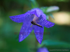 Blumen Insekten Schlangenberg (hubert_hamacher) Tags: blumen blume pilze bume insekten schmetterling pilz lichtung galmei
