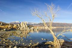 Lake Mono (fate atc) Tags: california monolake pinkfloyd thegreatbasin tufa usa alkalinelake endorheicbasin
