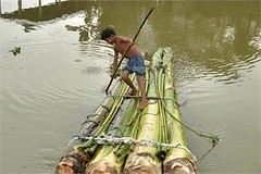 Morigaon: A boy prepares to cross floodwaters on a banana raft. Floods in the northern state of Assam have affected people living across six districts. (legend_news) Tags: morigaon a boy prepares cross floodwaters banana raft floods northern state assam have affected people living across six districts
