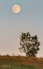 Summer Moonrise (AstroBackyard) Tags: summer moon ontario canada st night canon landscape evening 300mm moonrise astrophotography 7d astronomy phase gibbous catharines waxing