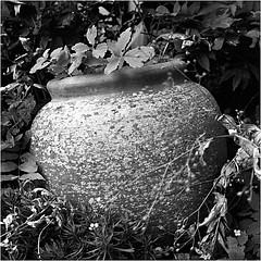 au fond du jardin, une jarre  (JJ_REY) Tags: bw france film colmar alsace jar epson ilford v800 jarre hp5plus rolleiflex28e