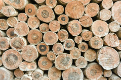 cut timber (Ton_aquatic) Tags: ring tree log wood forest fuel heap rough natural bark brown woodpile stacked stack circle pile stock abstract wall pine round section lumber texture cut color rural trunk firewood wooden background industry nature environment pattern textured timber raw material