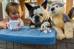 Sharing Snacks With Furry Friends (Jill Clardy) Tags: caitlin toddler snacks playhouse oreo dog wiley stuffed animal toys sharing cup 201607214b4a3668 boston terrier explore explored