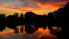 August 20th Sunset (Jim Mullhaupt) Tags: sunset sundown dusk sun evening endofday sky clouds color red gold orange pink yellow blue tree palm silhouette weather tropical exotic wallpaper landscape nikon coolpix p900 pond lake water reflection bradenton florida jimmullhaupt cloudsstormssunsetssunrises photo flickr geographic picture pictures camera snapshot photography nikoncoolpixp900 nikonp900 coolpixp900 manateecounty summer