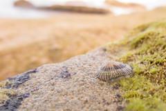 Viviendo entre mareas (marysaesteban) Tags: 2016 barbate cdiz espaa faro gastropoda mollusca playa spain trafalgar zahora gasterpodos julio siphonaria