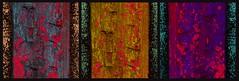 20160816 WoutvanMullem Drieluik Ducdalf Etalage 1-2 (Wout van Mullem) Tags: kunst de etalage zuidhorn wout van mullem kleurrijk boomschors roest rust drieluik tryptich triptiek