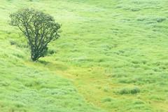 20Tonomine Highland (anglo10) Tags:    field  japan