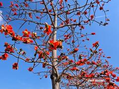DAO-80186 (Chen Liang Dao  hyperphoto) Tags: