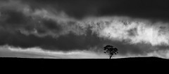 while I need words like these (keith midson) Tags: tree hill oatlands tasmania clouds lonetree