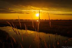 Sunset near Venice (martintimmann) Tags: see wasser sundown italy venice lake sea sun seagrass romance romantik venedig sonne sky italien water seegras sonnenuntergang himmel