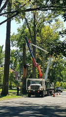 city removes broken trees 02 - Cleveland Heights microburst - 2016-08-29 (Tim Evanson) Tags: clevelandheightsohio clevelandheightsmicroburst weather trees myhouse