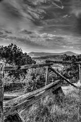 svegliarsi (Andrea_Federici) Tags: andreafederici canon eos50d valdorcia bw bn bianconero landscape paesaggio nuvole clouds alberi tree