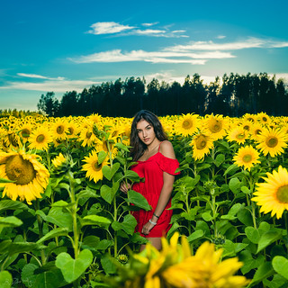 Rumejsa Ymeri - Sunflowers