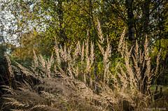 Jesiennie (jacek.staszczuk) Tags: autumn jesie polska poland lowersilesia dolnylsk nature padziernik october kolory colors s175028 sigma175028 polarizingfilter filtrpolaryzacyjny nikond7000