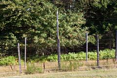 Struthof 2016 (shordzi) Tags: centreeuropendursistantdport struthof natzweiler konzentrationslager klnatzweiler natzwiller kznatzweilerstruthof europischeszentrumdesdeportiertenwiderstandskmpfers borispahor nekropolis necropolis fence zaun barbedwire stacheldraht grenze border frontire barbel