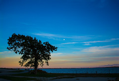 Tree at sunset (E. Aguedo) Tags: tree sunset sky clouds colors warwick rocky point park ocean beach rhode island new england ngc