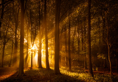 Radiant Rays (martijnvdnat) Tags: leaf autumn beam branches canopy dawn enchanting fall fog foliage forest glowing leaves light mist misty morning natural nature outdoor park peaceful radiance ray rays season serenity sun sunbeam sunlight sunrays sunrise through tree trees wood woods