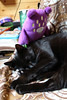 Iggletober day 20 - something purple (House Of Secrets Incorporated) Tags: iggletober gloomybear halloween toys plush plushie monster octoberchallenge photochallenge loa cat blackcat havanabrown cats pets animal animals photooftheday photooftheday2016 aphotoaday2016 dailyphoto dailyphoto2016 dailyphotography dailyphotography2016 dailyphotograph