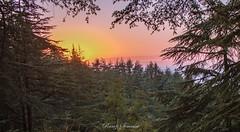 Sunset over Lebanon - Hadath El Jebbeh - Bcharreh (ramzisemrani) Tags: sunset lebanon landscape lights love liban lebanonmountain landscapes livelovelebanon lebanonmountains tree trees hadath bcharee nature northlebanon