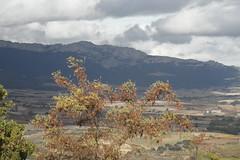 Arabako Errioxan (eitb.eus) Tags: eitbcom 27117 g1 tiemponaturaleza tiempon2016 alava laguardia miguelangellopezdelacalle
