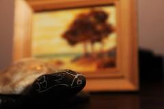 Sea Shore (shanejonesppc2014) Tags: canon 550d turtle animals nature sunset artwork rocks closeup macro