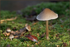 Autumn Fungi (image 3 of 3) (Full Moon Images) Tags: rspb sandy lodge thelodge wildlife nature reserve autumn fungi