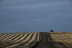Prairie patterns (Len Langevin) Tags: alberta farm prairie harvest swaths canada overcast nikon d300 nikkor 18300