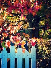 (Kaater) Tags: autumn red rot laub herbst zaun bltter bunt
