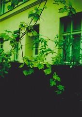 outside (julianvanurban) Tags: vienna street blue urban green art film analog outside julian cross ct indoor x iso electro 100 van process agfa 35 yashica precisa julianvanurban