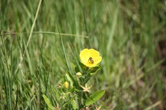 Florzinha recebendo visita (Vagner Eifler) Tags: flores brasil natureza flor portoalegre riograndedosul pontagrossa centrosocialedetreinamentobanrisul