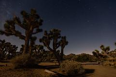 Joshua Trees at Night (thefuton) Tags: california nature night dark desert joshuatree dry campground mojavedesert joshuatreenationalpark blackrockcampground
