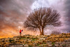 Teos, Turkey (Nejdet Duzen) Tags: trip travel sunset tree turkey türkiye ruin teos historical izmir harabe günbatımı ağaç turkei seyahat tarihi urla templeofdionysus iyonya sığacık