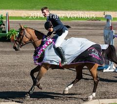 141214_CSI-W_7808.jpg (FranzVenhaus) Tags: horses jumping sydney australia event nsw aus equestrian siec csiw worldcupjumping