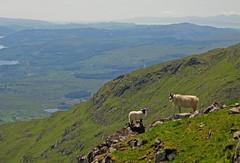 Living on the Edge (RoystonVasey) Tags: mountain canon scotland ben walk horseshoe hs munro cruachan stob poweshot miniaturelandscape daimh sx260 giganticanimals