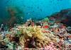 2014 Maldives - GoPro 17834.jpg