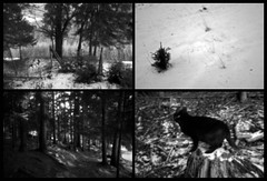 IN THE WOODS (LitterART) Tags: wood dog chien cane forest pinhole hund fujifilm wald steiermark skink styria xseries