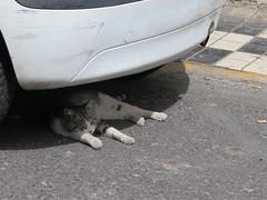 El Burrero (Risager) Tags: cat grancan elburrero