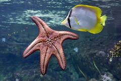 Aquarium de Paris  (18) (Mhln) Tags: paris aquarium requin poisson trocadero poissons meduse 2015 cineaqua